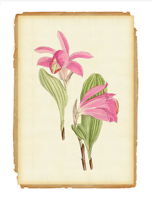 Botanical Art Digital Mix Media On Paper