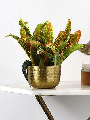 Antique Brass Hammered Planter (L-5in, W-5in,H-3in)