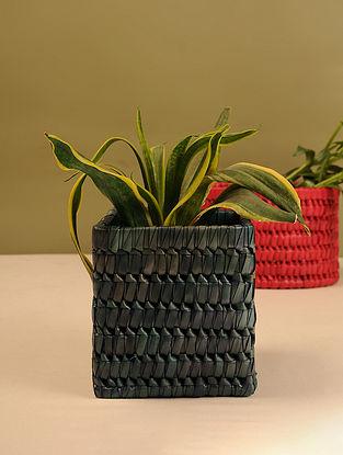 Palm Leaf Swamp Green Square Planter Box (L - 6.5in, W - 6.5in, H - 5.6in)
