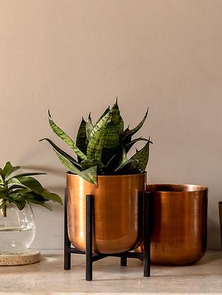 Copper Salix Planter (L-5in W-5in H-6.25in)