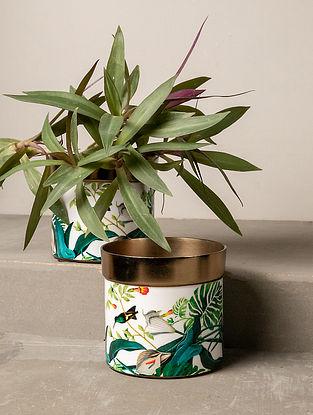 Multicolour Rainforest Lush Planter (L-4.5in W-4.5in H-4.5in)