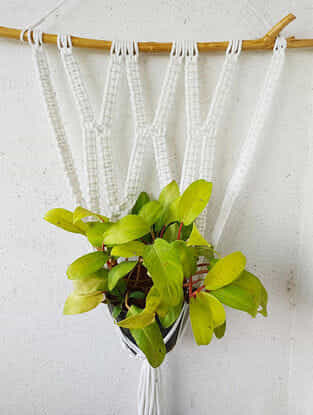 White Macrame Acrylic and Wood Pot Holder (43in x 26.5in)