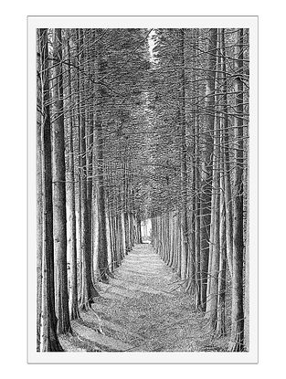 Treescape Avenue Art Print on Paper- 12in x 18in
