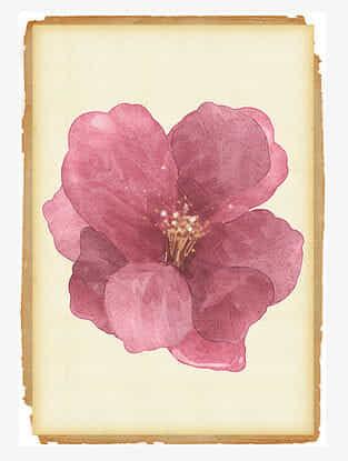 Hibiscus Divine Art Print On Paper