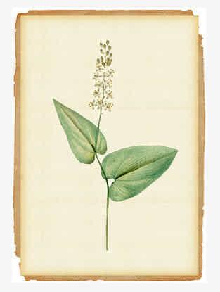 Blossom Art Print On Print