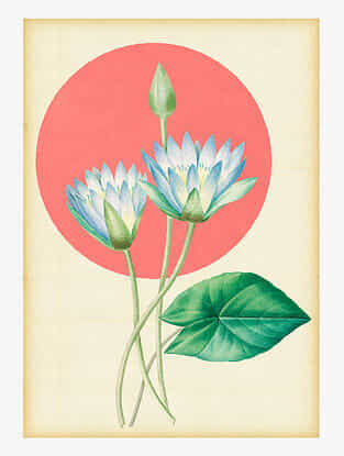 Water lily Art Print On Paper