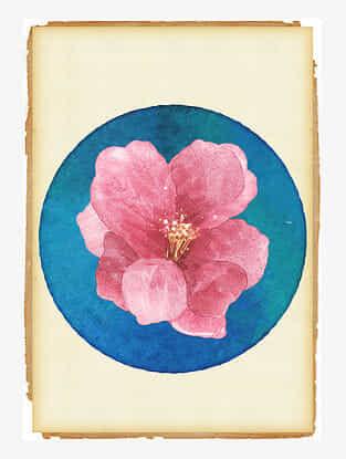 Divine Hibiscus Art Print On Paper