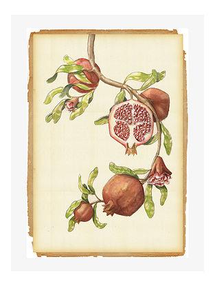 Botanical Pomegranate Digital Mix Media Art on Paper