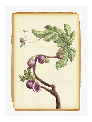 Botanical Fig Digital Mix Media Art on Paper