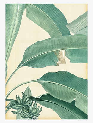 Tropical Banana leaf Art Print On Paper