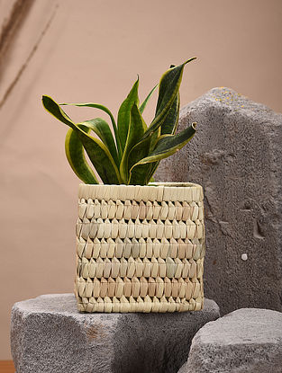 Beige Handcrafted Palm Leaf Planter (L - 6in, W - 6in, H - 6in)
