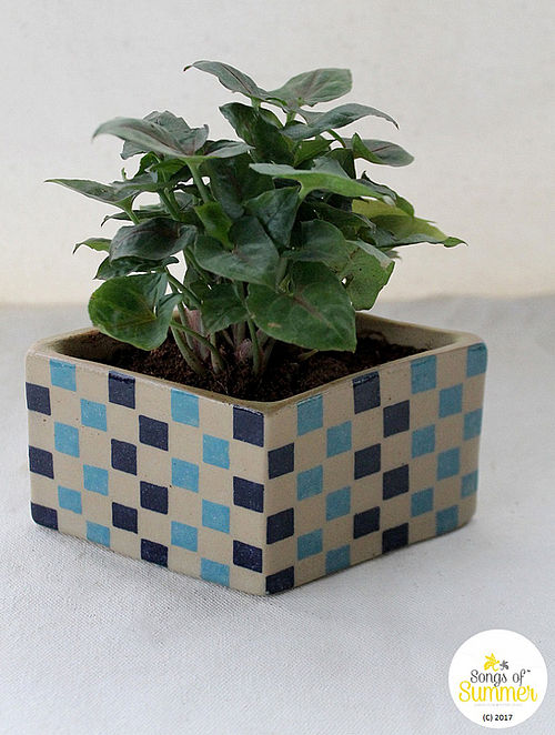 Checkmate Turquoise and Cobalt Stoneware Planter (Dia :5.5in, H:2.75in)